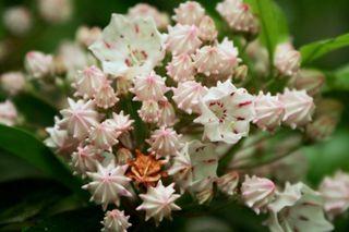 Pinkwhiteflowers2